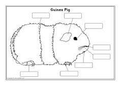 pet worksheets images worksheets pets preschool