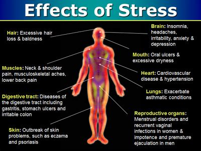 Stress Tips Calm Your Mind, Heal Your Body