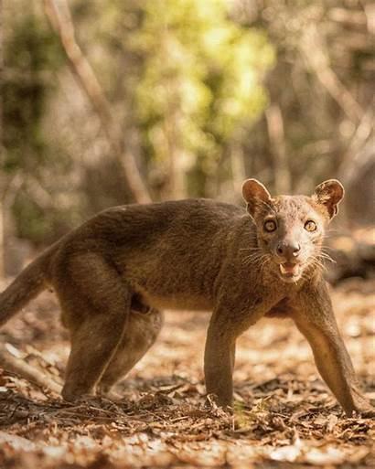 Geographic National Gifs Wildlife Wild Animal Natgeo