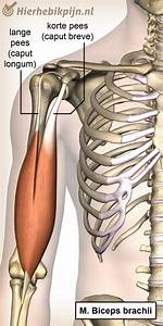 Arthrose lombaire - lombarthrose - Symptômes et traitement