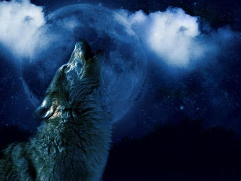 Animated Wolf Wallpaper Hd - moving wolf wallpapers wallpapersafari
