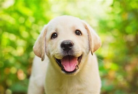 nieuw huis wat nodig wat heb je nodig voor een hond puppy checklist beeztees