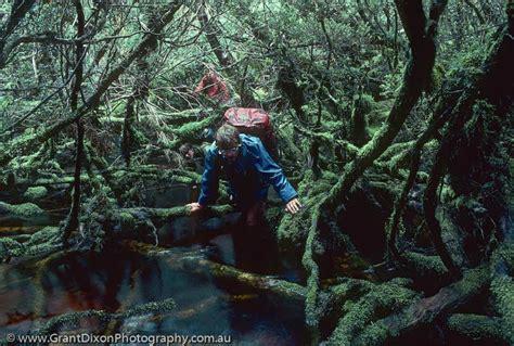 horizontal scrub image  australian photographer grant dixon