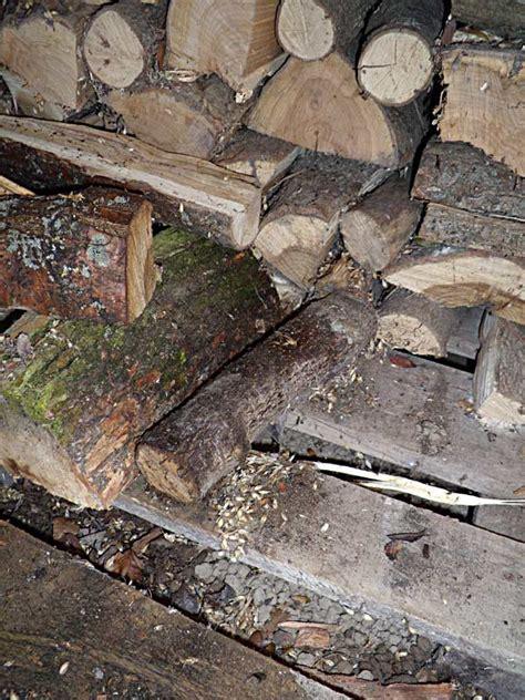 ratten bekaemen bei befall im brennholz lager