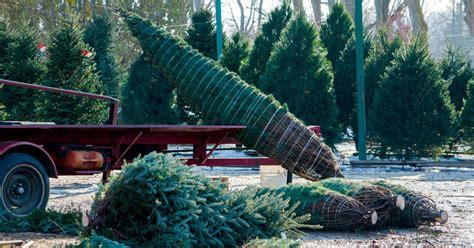 christmas tree farms upstate ny best christmas tree farms new york city ct and nj 5890