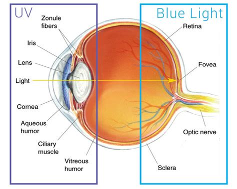 blue light treatment for sun damage harmful effects of uv and blue light to your eyes harmful