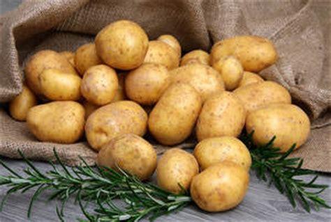 pomme de terre plantation culture r 233 colte et maladies