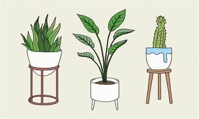 Plant Lady Plants Air Cat Reasons Improve