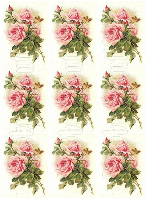 shabby chic pink roses shabby chic pink roses digital collage shabbybeautiful