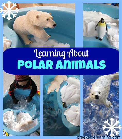 learning about polar animals kid network 906 | ee18127afd85009e996246daff6df270