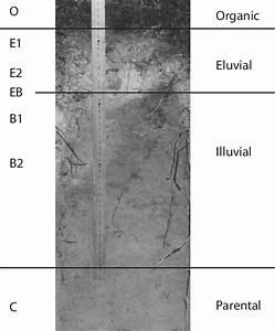 Podzol Soil Profiles Are Stratified Into Distinct Horizons