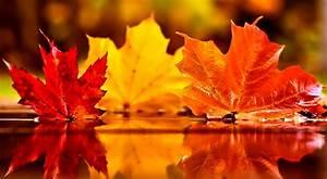 Autumn, Leaf, Wallpaper, 68, Images