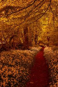 golden path pictures photos and images for