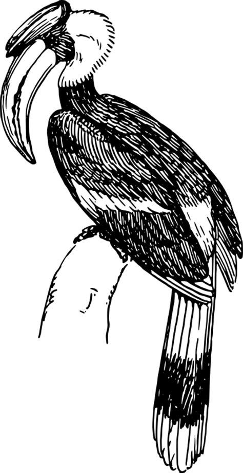hornbill  vector vector