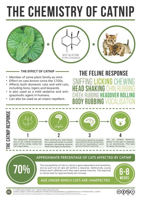 how to use catnip what is catnip the infinite spider