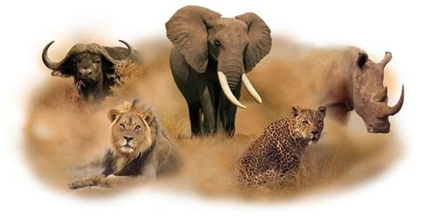 Burundi Animals