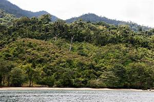 Madagascar IN PICTURES | Plant Talk