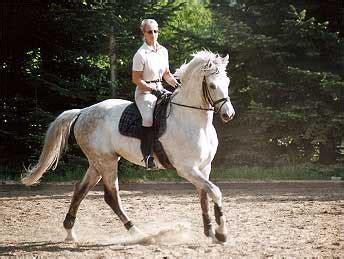 reitsport dierstorf pensionspferde