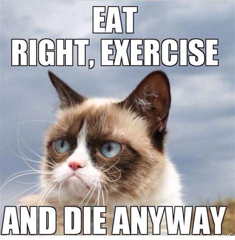 Cat Gym Meme - 29 best grumpy cat images on pinterest jokes animal jokes and animal memes
