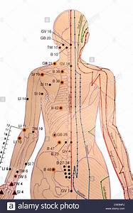 Chinese Acupuncture Chart Stock Photo  49870090