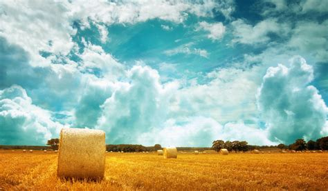 Hay Fields Android Wallpapers