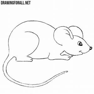 How to Draw a Mouse For Beginners | Drawingforall.net