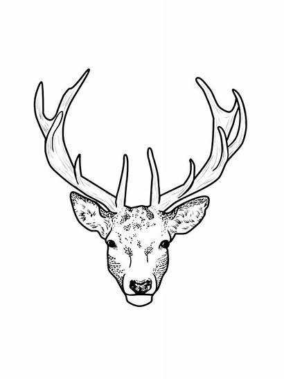 Deer Coloring Head Animals