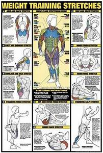 Weight Training Stretches Chart - Healthy Fitness Workout ...