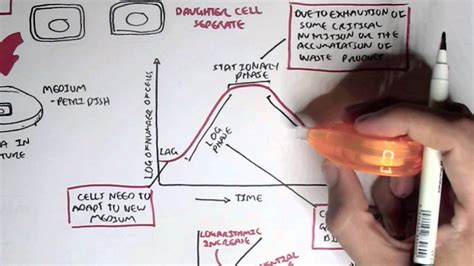 microbiology bacteria growth reproduction