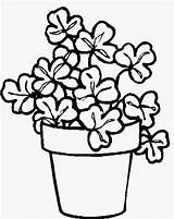 Pot Coloring Flower Pages Pots Plant Colouring Drawing Flowers St Patrick Potted Clipart Shamrocks Getdrawings Clip Shamrock sketch template