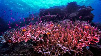 Coral Reef Gifs Gfycat Atol Animated Pulau