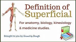 Superficial Definition (Anatomy, Medicine, Kinesiology ...  Superficial