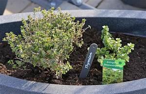 Englischer Garten Pflanzen : neue wege pflanzen und kr uter heim am main ~ Articles-book.com Haus und Dekorationen