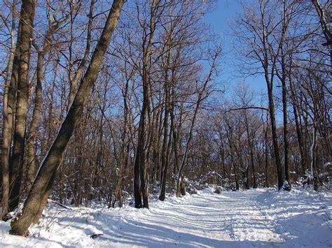 winterwald schnee kostenlose hintergrundbilder