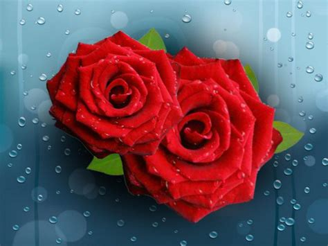 pretty raindrops  roses clipart   cliparts