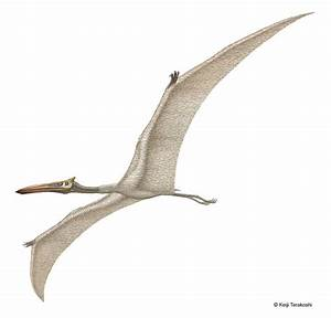 Quetzalcoatlus Pictures & Facts - The Dinosaur Database