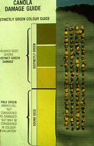 Colour Chart Swathing And Harvesting Canola Publications