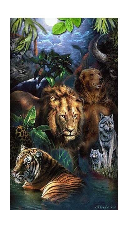Animals Animales Tiger Wild Animal Salvajes Animaux