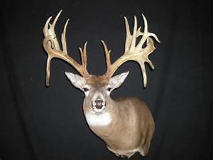 Image Gallery huge non typical buck