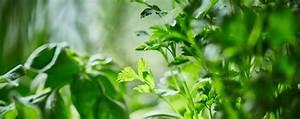 Kleiner Gemüsegarten Anlegen : hochbeet anlegen der kleine gem segarten mit dem ~ Pilothousefishingboats.com Haus und Dekorationen