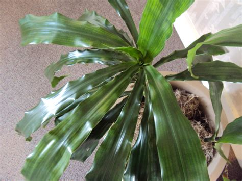 [wednesday  The Plant Lady Chronicles] How To Clean And