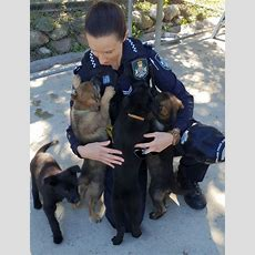 Introducing The O Litter Police Pups  Dog Squad