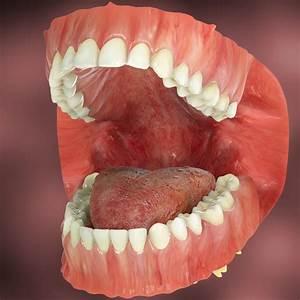 realistic teeth gums tongue max
