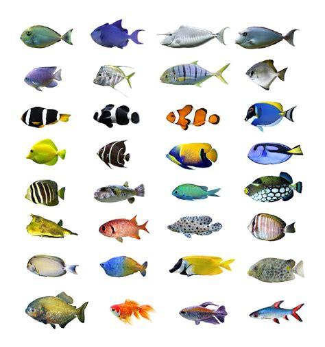 fish aquaknow