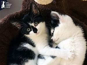 Laver Un Chaton : ils sauvent des chatons retrouv s dans une machine laver ~ Nature-et-papiers.com Idées de Décoration