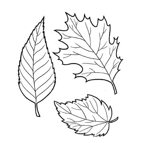 Coloring Leaves by Tree Leaves Coloring Pages For To Print For Free
