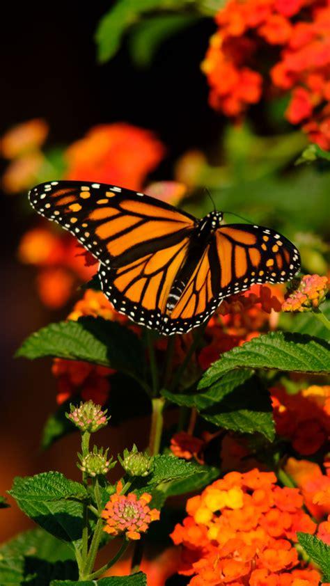 Download Wallpaper 2160x3840 Monarch Butterfly Butterfly