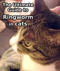 how to treat ringworm in cats cats and the o jays on