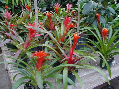 care of plant garden tips bromeliad plant care interior design inspiration