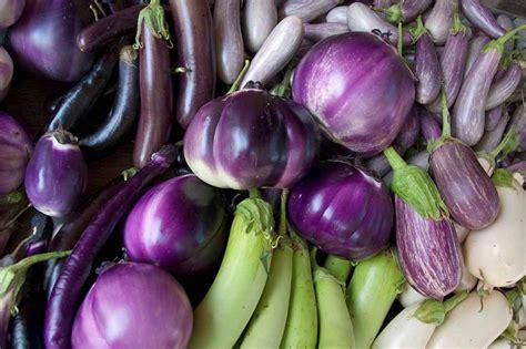 growing flowers indoors growing eggplant indoors garden culture magazine